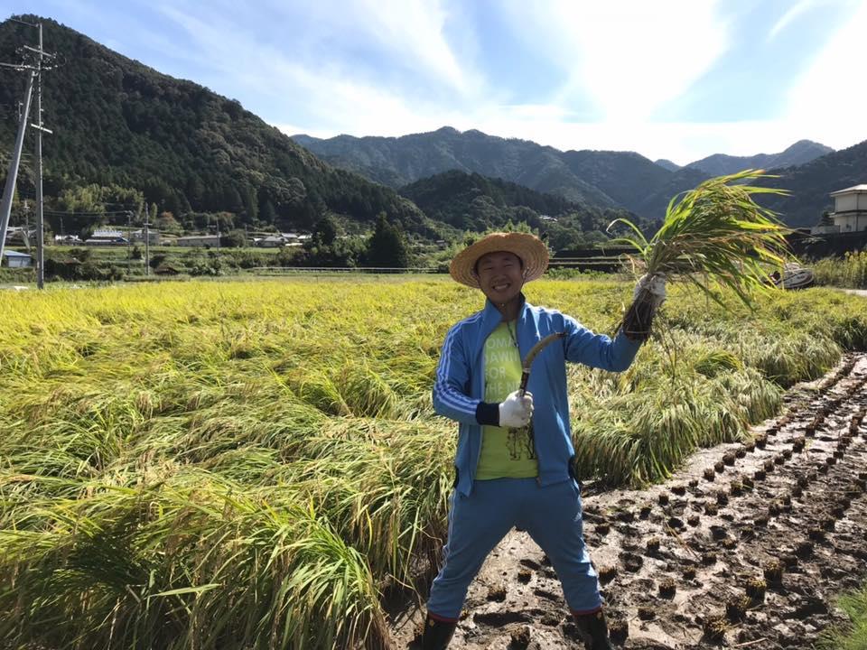 みんなのまちづくり隊 - 稲刈り体験