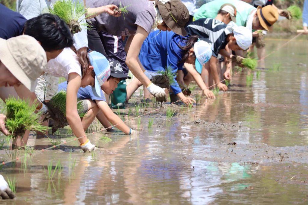 大木米の田植え