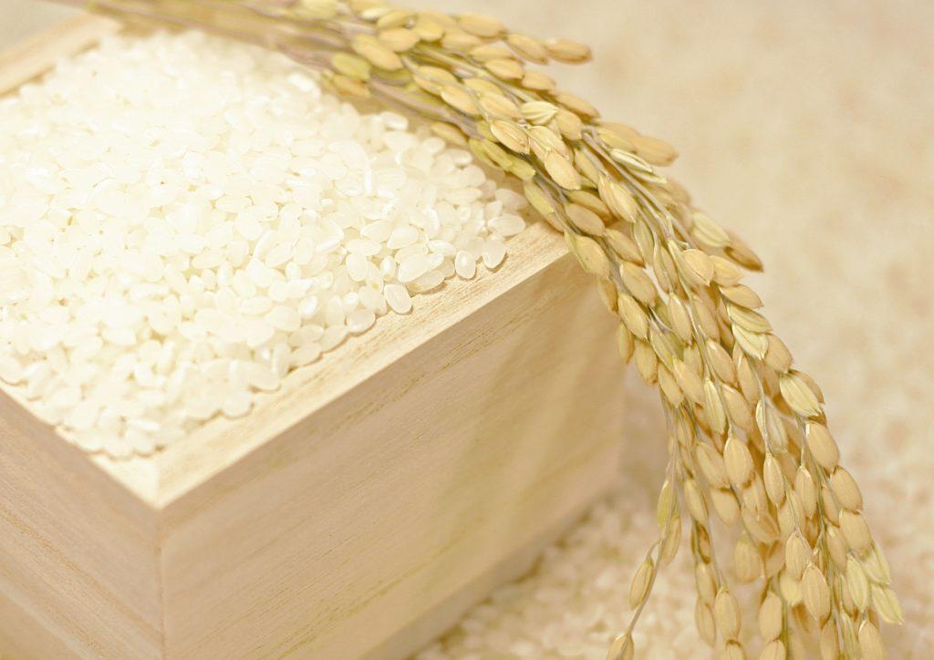 大木米のすくい取り